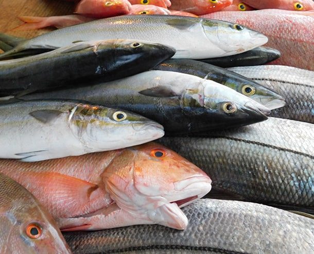 les produits de la mer-la Persévérance-la pêche autrement