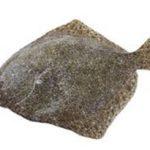 Image Turbot pièce de 1kg sur fond blanc-La pêche du jour de Turbot pièce de 1kg-thumbnail